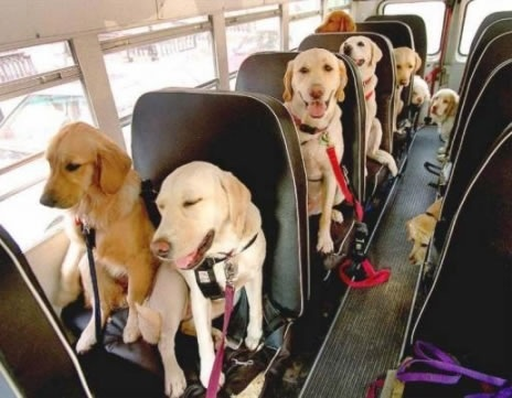 Back to School Tips for the Family Pet
