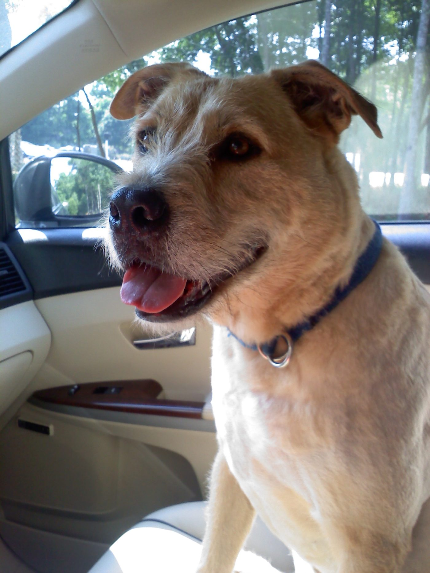 #terrierdogtraining #dogtrainermtpleasant #dogtrainingcharleston