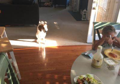 #summervilledogtraining #barkbusters