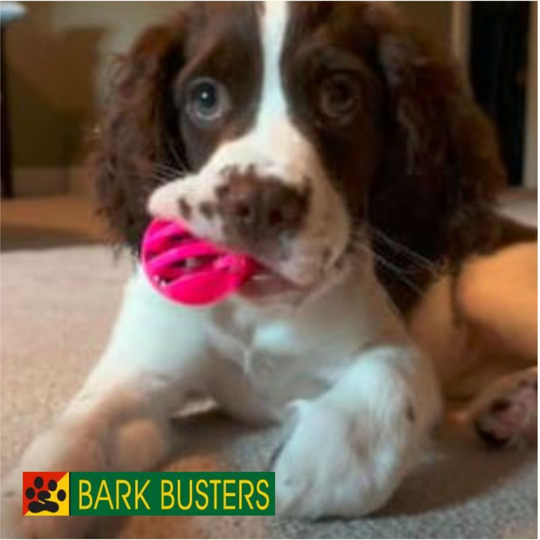 #stopdogbiting