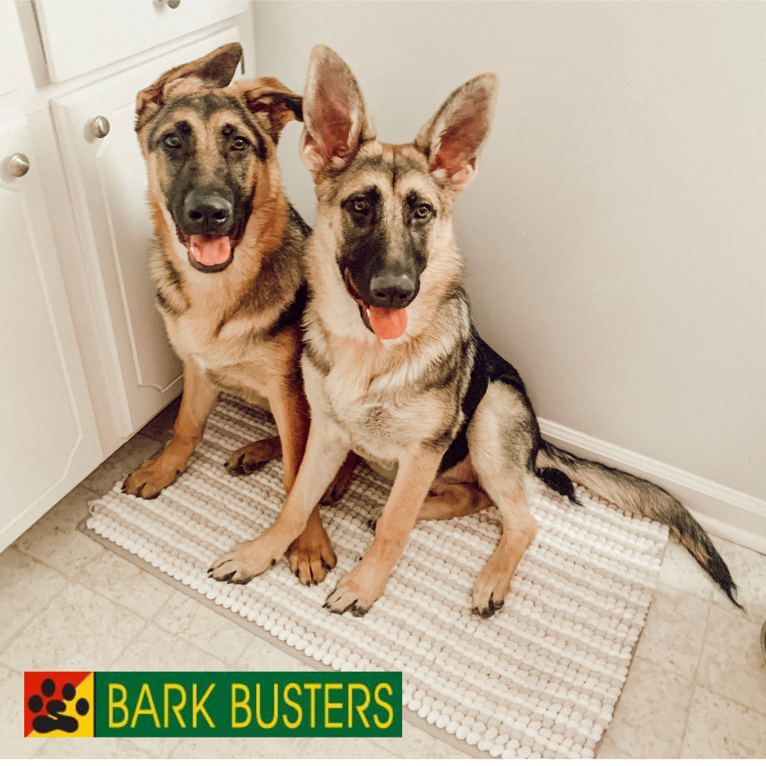 #dogtrainingmonckscorner #barkbustersdogtraining