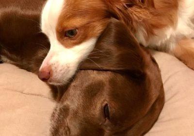 #dogtrainingmtpleasant