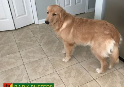 Mtpleasantdogtraining