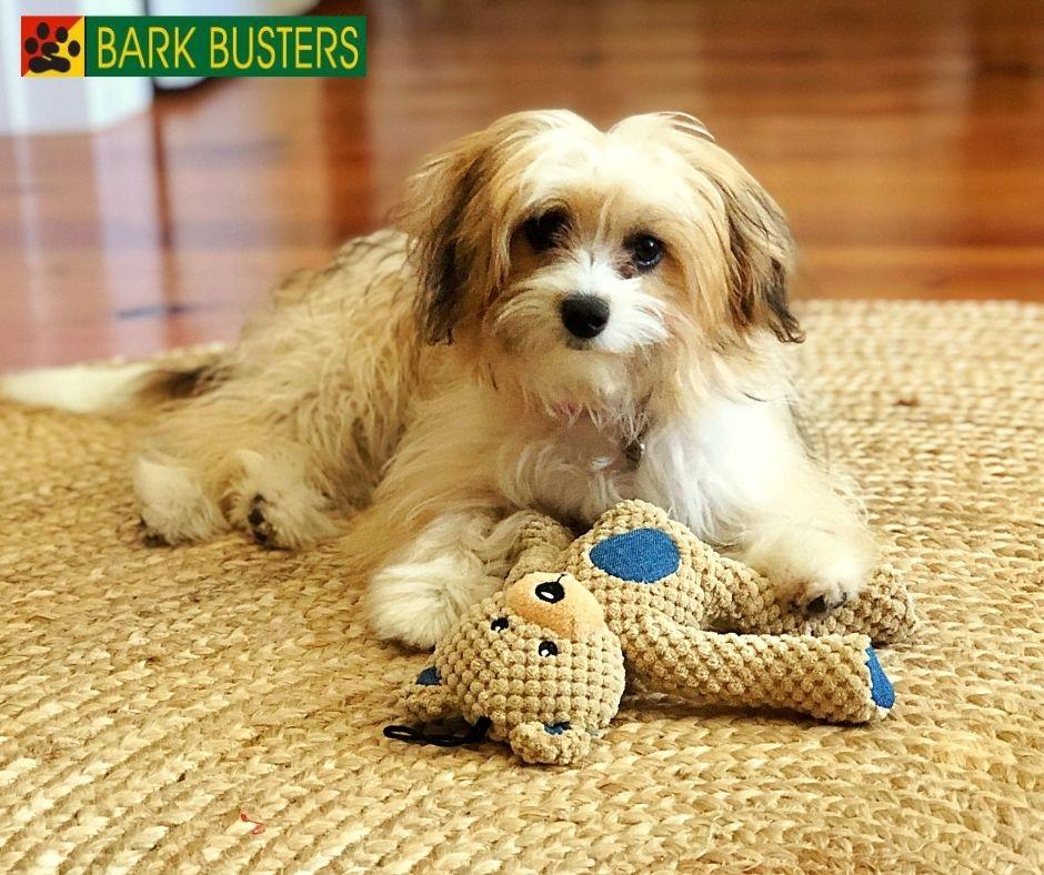 #puppytrainingcharleston
