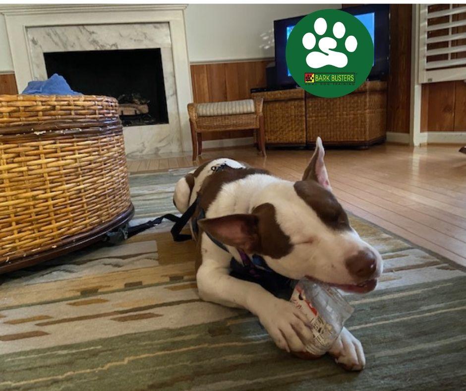#sullivanislanddogtraining