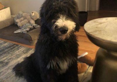 #puppytrainingcharlotte